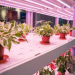 How You Can Use Grow Lights